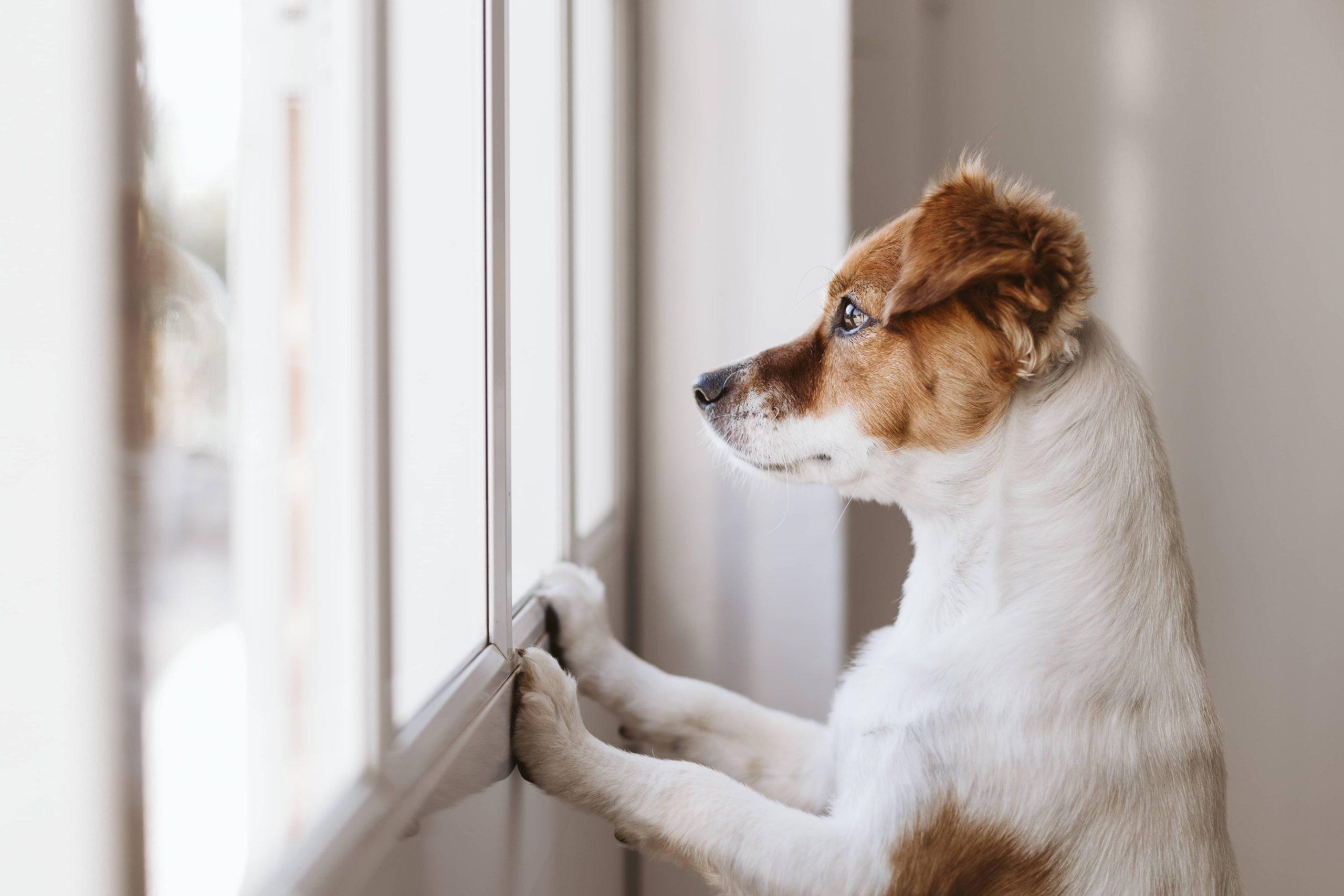 Los consejos más recientes sobre el COVID-19 y tus mascotas